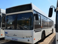 Ростов-на-Дону. Один из новых автобусов МАЗ-103 (8BK 9664)
