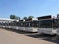 Ростов-на-Дону. Десять новых автобусов МАЗ-103