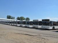 Ростов-на-Дону. Автобусы МАЗ-103