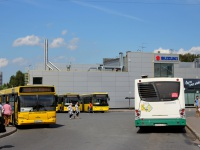 Санкт-Петербург. Volgabus-6271.00 в762се, МАЗ-103.485 в686рр