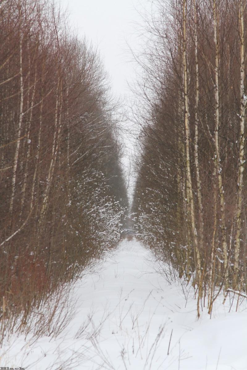 Рязань. Вид на бывший перегон Гуреевский - Тумская, РВУЖД