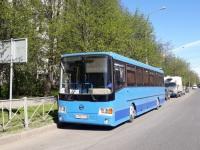 Санкт-Петербург. ГолАЗ-5256.33-01 х930ук