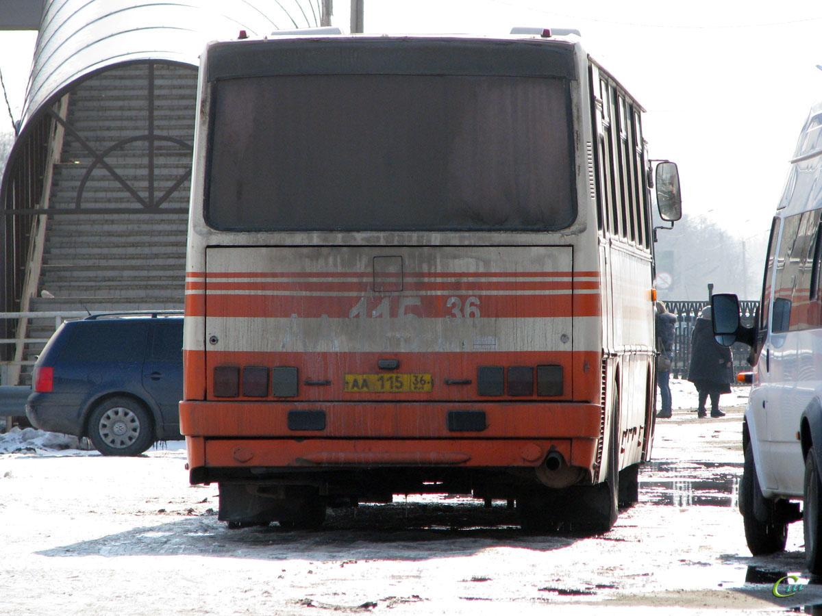 Павловск. Ikarus 250.95 аа115