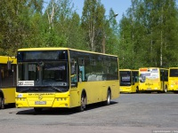 Санкт-Петербург. Golden Dragon XML6125CR в055му